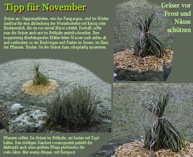 beet mit pampasgras, herbstblüher chinaschilf (miscanthus sinensis) – ziergräser im, Design ideen